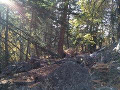 The large pine tree that marks the cluster of Strawberry Cream Boulders.