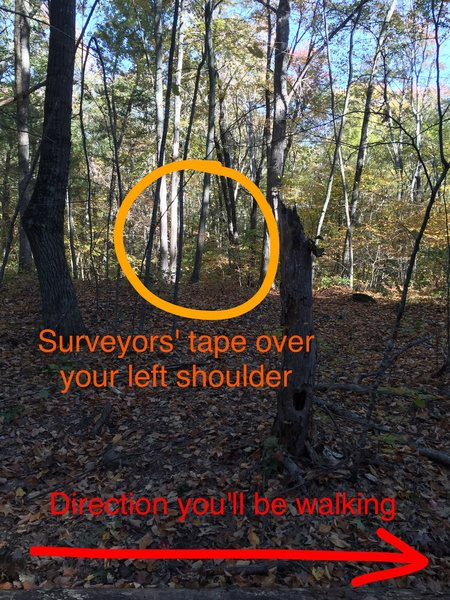 Do you see the surveyors' tape?