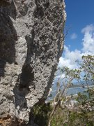 Rock Climbing Photo: Iguana drive. 25 ft Overhanging coral stone very s...