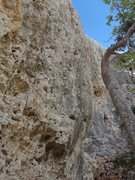 Rock Climbing Photo: Marea, 30 ft wall overhanging start with not many ...