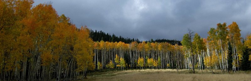 Fall on The Pass.