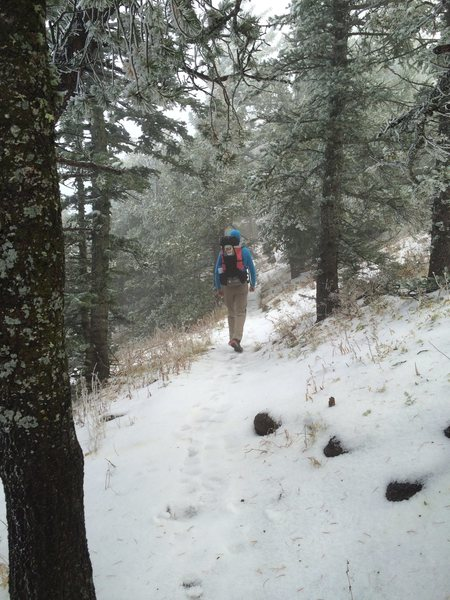 October snow / hail, Sandia Mountains, NM.