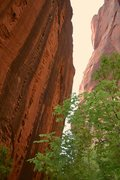 Rock Climbing Photo: Climbing the ladder.