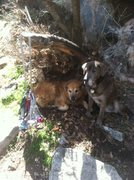 Rock Climbing Photo: Crag dogs