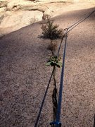 Rock Climbing Photo: Vegetated crack.