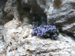 Rock Climbing Photo: local flora of the cave