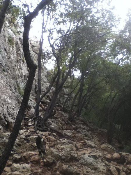 crags in the woods