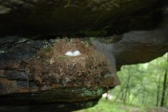 Rock Climbing Photo: Sometimes nature needs a good hold. This nest with...