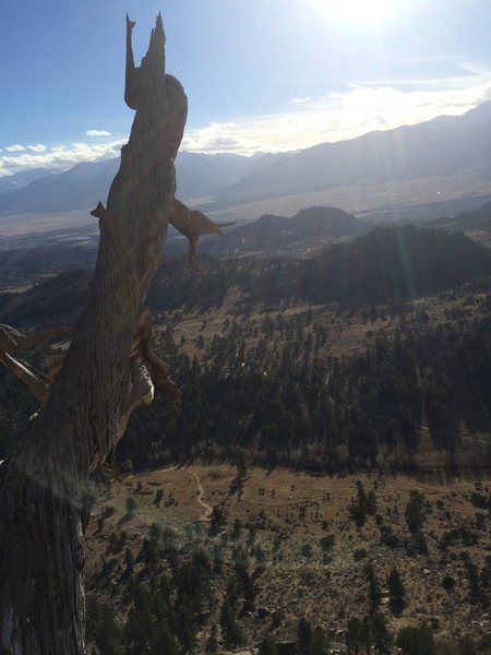 View from the dead tree belay!