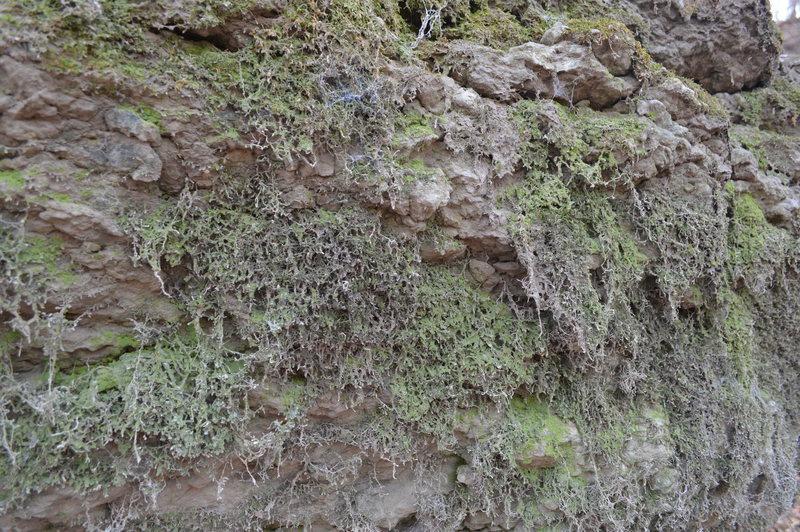 Rock Climbing Photo: Not a lot of climbing happening here