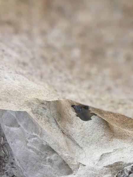Rock Climbing Photo: Lyme Disease