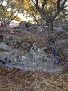 Rock Climbing Photo: top rope tree