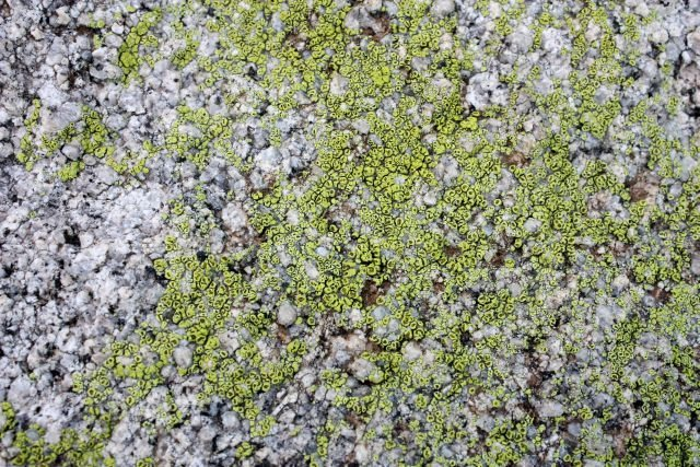 Rock Climbing Photo: Some nice lichen on the north side of the Big Top,...