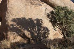 Rock Climbing Photo: Pencil Cholla (Cylindropuntia ramosissima) and sha...