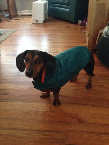 Example of home made dog jacket