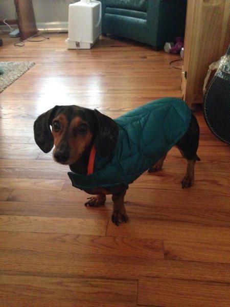 Rock Climbing Photo: Example of home made dog jacket