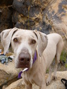 Rock Climbing Photo: This is Jay's dog Zena. These rocks belong to her....