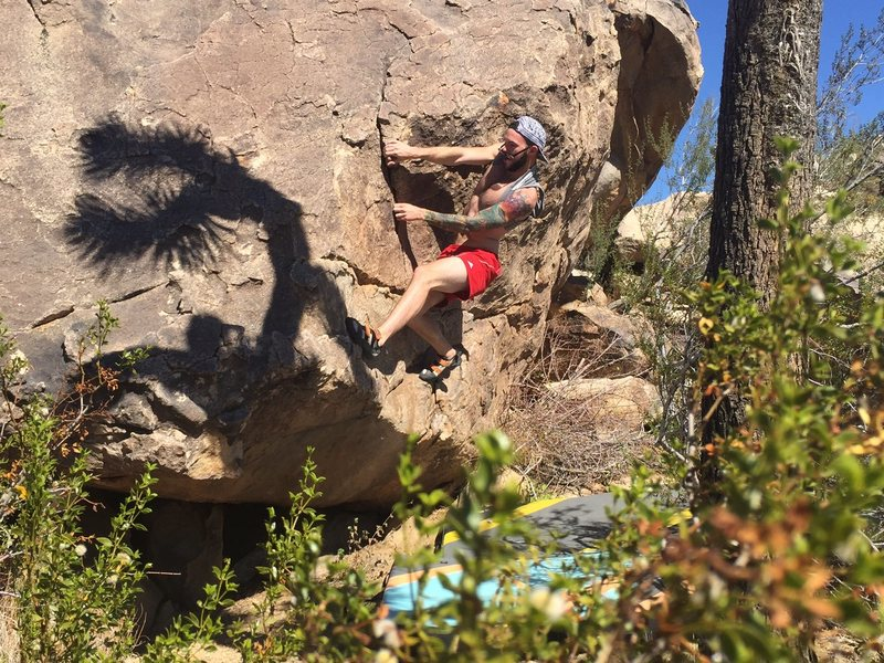 K. Adams warming up on the first V1 at the Bighorn Boulders, J.Tree