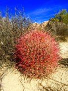 Rock Climbing Photo: Desert Flora!!!
