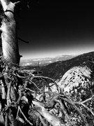 Rock Climbing Photo: Old tree on the Mountain!!