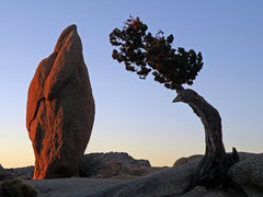 Rock Climbing Photo: Sunrise.