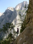Rock Climbing Photo: Looking up 'Getting Wood' on a chilly morning.  No...