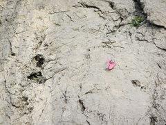 Rock Climbing Photo: The pink hangers.