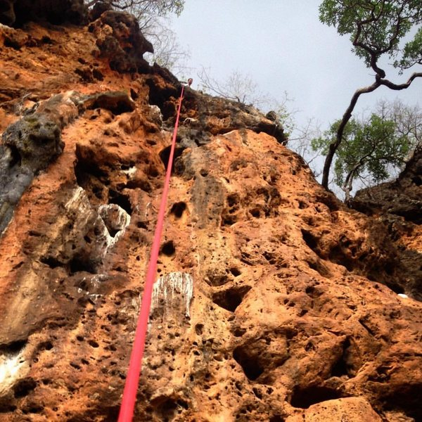 Rock Climbing Photo: Looking up at the Bees Knees route after the First...