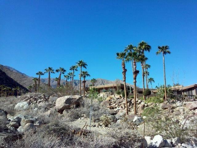 Rock Climbing Photo: Sun and palms, Dry Falls