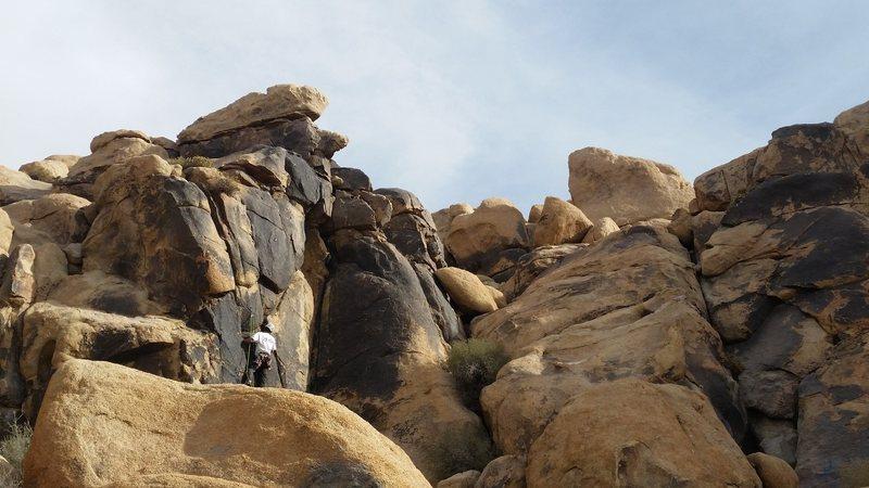 climbing wildcard