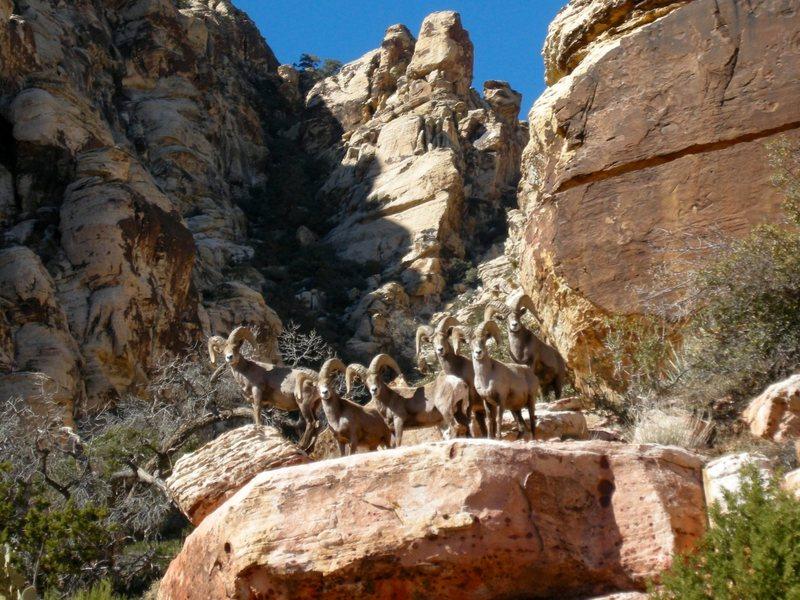 Rock Climbing Photo: Photo taken near Angel Food Wall.