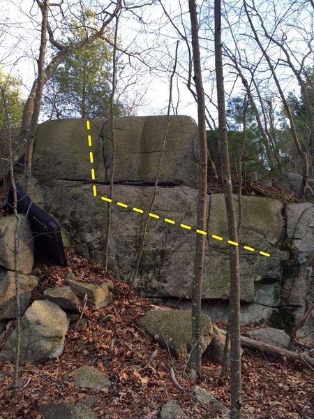 Rock Climbing Photo: Baby Tree.