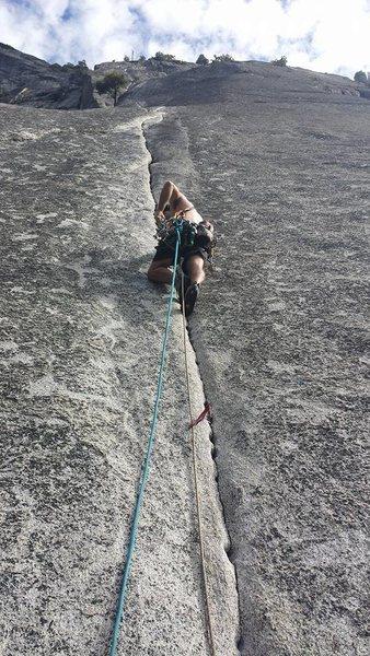 Rock Climbing Photo: The calf feast