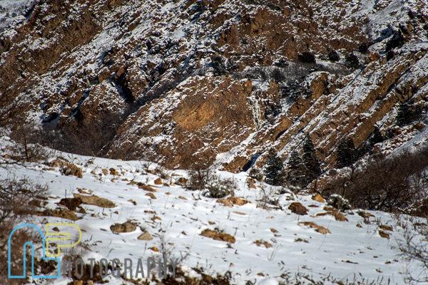 Boreas on Mt. Olympus. 12.27.15