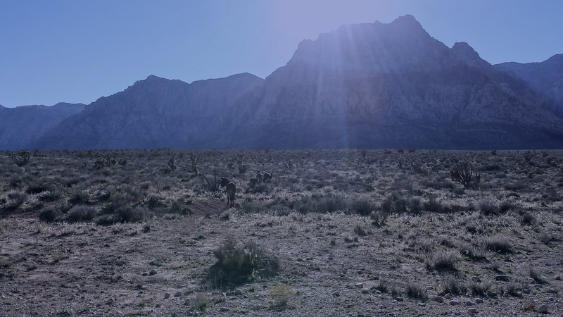 Alien Donkey Invasion.  Red Rock Nevada.  November 2015.