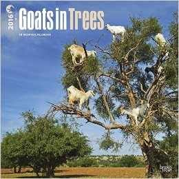 Goats in Trees calendar