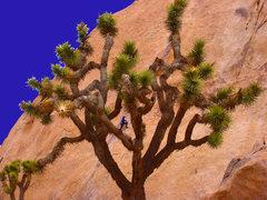 Rock Climbing Photo: Stitcher Quits