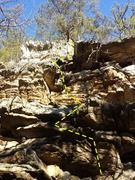 """New route above Maury River Wall. """"Lichen Ledges"""" 5.5x (ish)"""