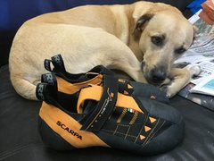 Rock Climbing Photo: Ginger is sad to see her Scarpa's go