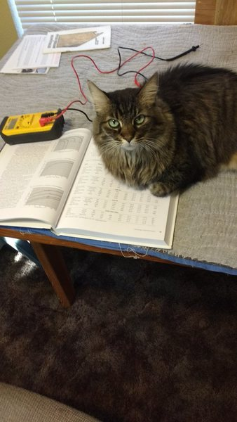 Amy cat has decided reading about DC circuits is not being allowed