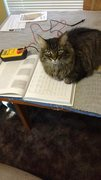 Rock Climbing Photo: Amy cat has decided reading about DC circuits is n...