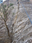 Rock Climbing Photo: splitter P4