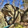 Start of Oakleaf Hydrangea (Heel Hook)