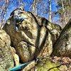 Topout of Oakleaf Hydrangea