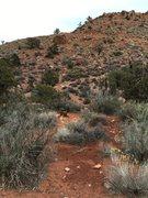 Rock Climbing Photo: The Bees Knees