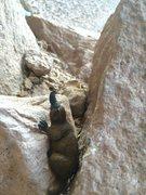 Rock Climbing Photo: Pudge's first crack climb