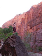 Rock Climbing Photo: Zion, so many walls and so little time.