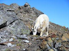 Rock Climbing Photo: Mt. Stuart.