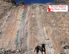 Rock Climbing Photo: Weasels Ripped My Flesh (February 2016)