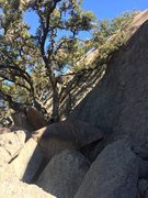 Rock Climbing Photo: Trees at the belay area as your approaching from T...